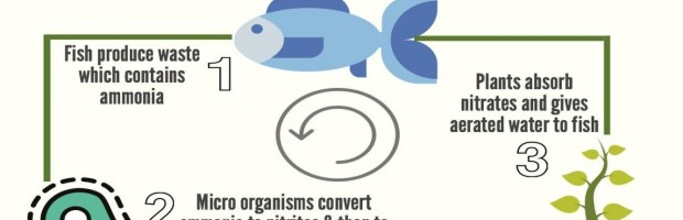 Aquaponics Cycle